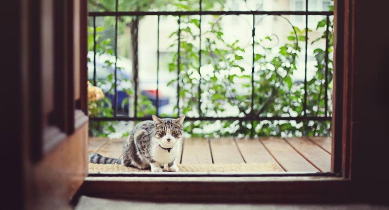indoor-cats-age-quicker-outdoor-cats