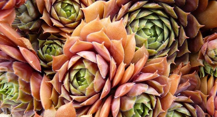 indoor-succulents
