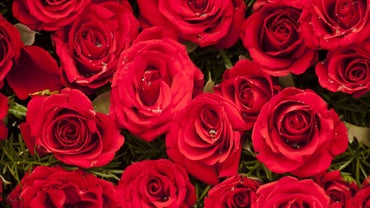 "What Is the Best Insulting ""Roses Are Red"" Valentine's Day Poem?"
