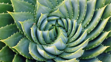 What Are Some Interesting Facts About Fibonacci?