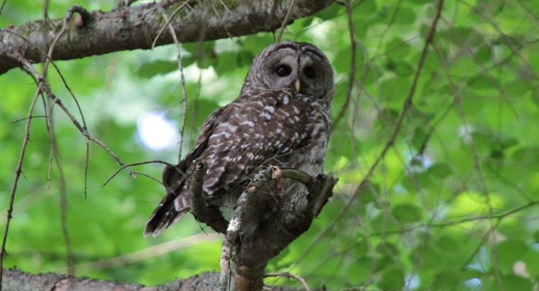 interesting-owls-kids