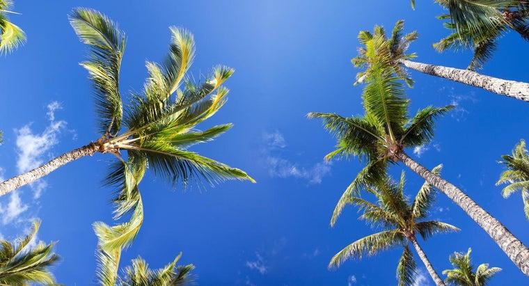 interesting-palm-trees