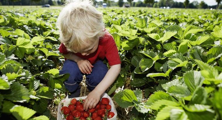 interesting-strawberries