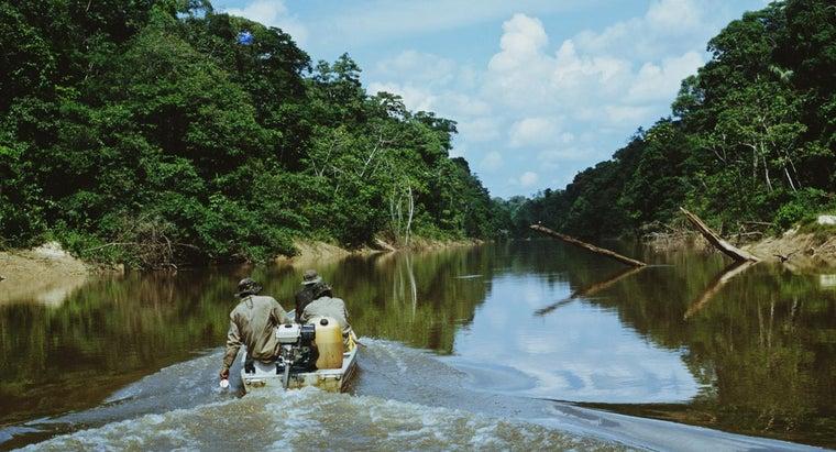 interesting-tropical-rainforest