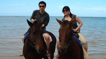 Who Invented Horse Riding?