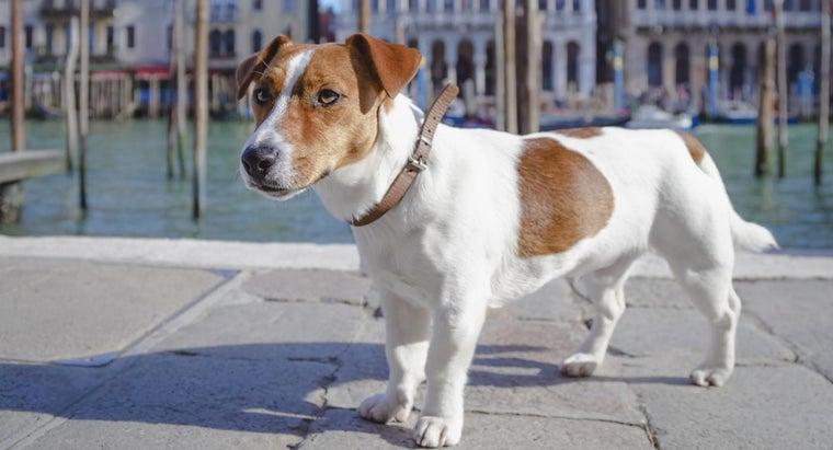 italian-dog-names
