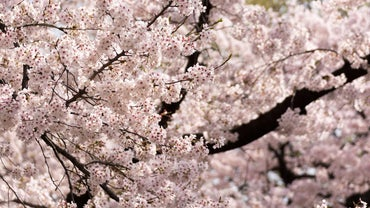 What Is Japan's Vegetation Like?