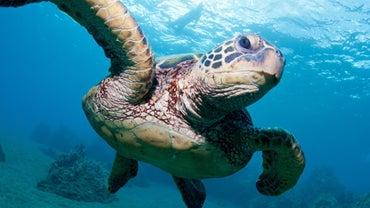 What Is a Job Description for Marine Biology?