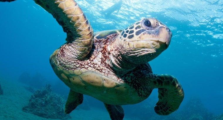 Job Description Marine Biology