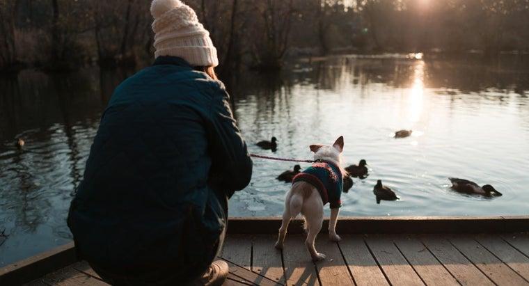 keep-ducks-off-dock
