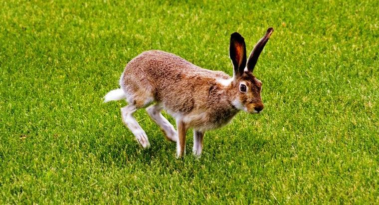 keep-rabbits-off-lawn