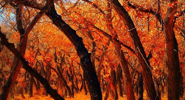 kill-cottonwood-tree
