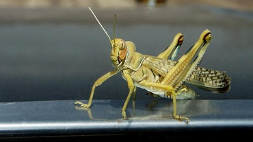 How Do You Kill Grasshoppers?
