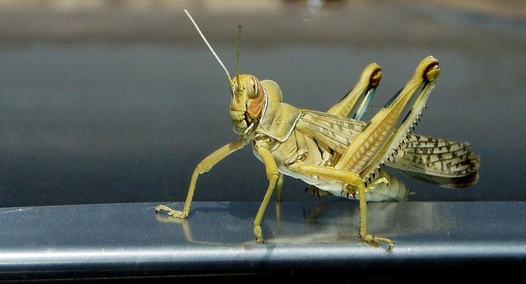 kill-grasshoppers