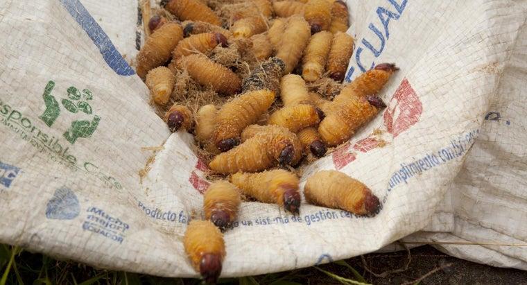 can-use-kill-grub-worms