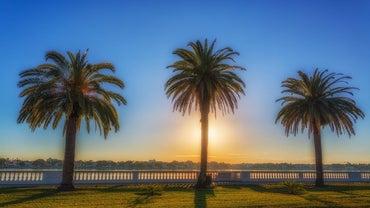 How Do You Kill a Palm Tree?