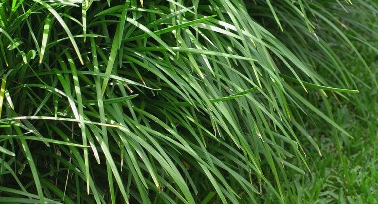 kill-weeds-monkey-grass