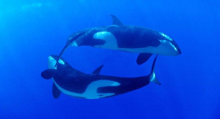 killer-whale-s-habitat