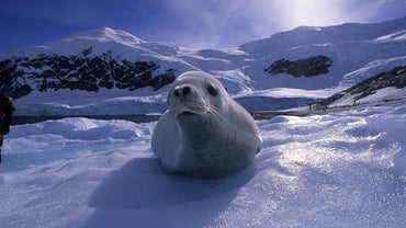 What Kind of Animals Live in Antarctica?