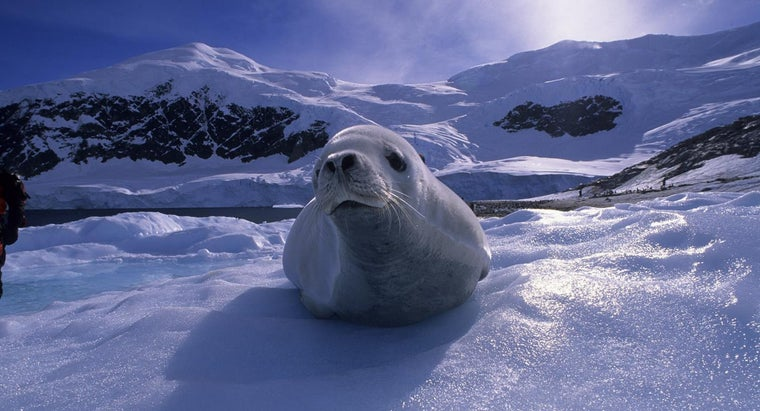 kind-animals-live-antarctica