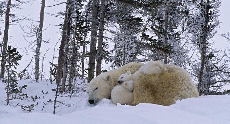 kind-animals-live-canada