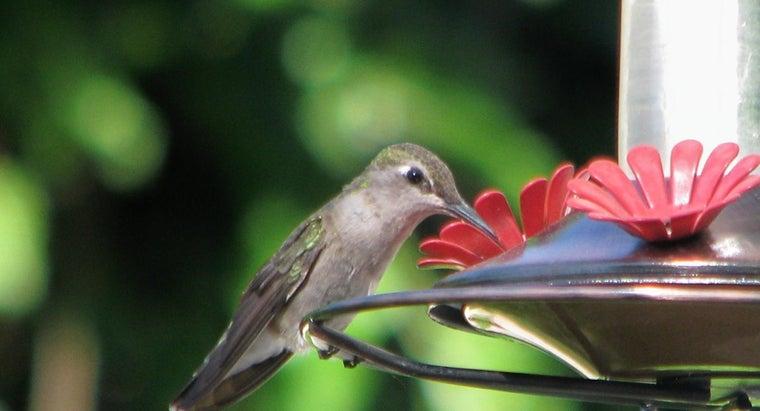 kind-food-put-hummingbird-feeder