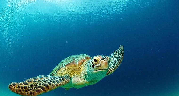kind-habitat-green-sea-turtle-like