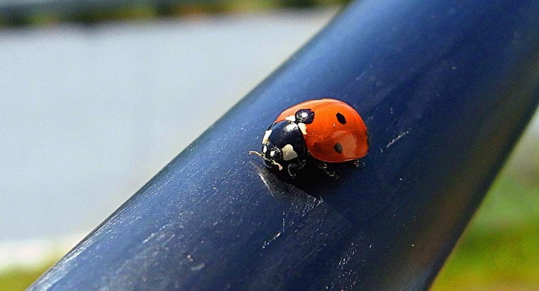 kinds-ladybugs-poisonous