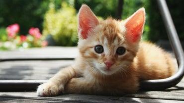When Is a Kitten Full Grown?