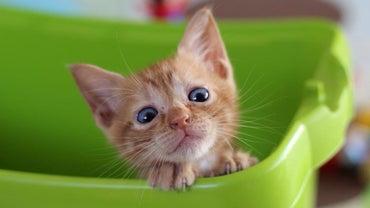 What Do Kittens Eat?