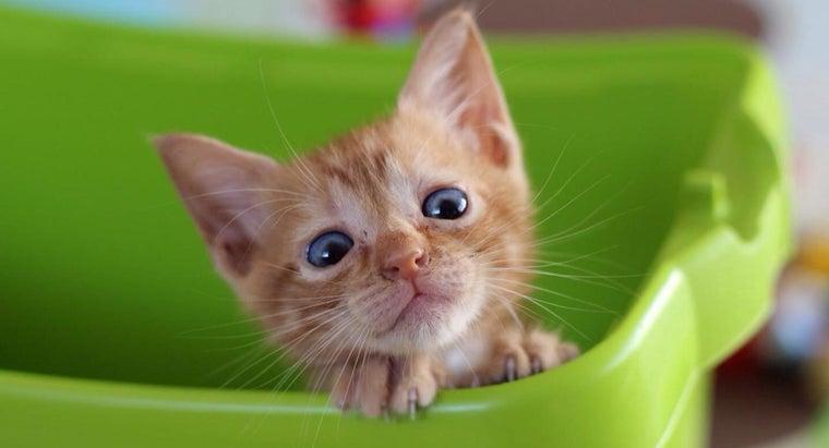 kittens-eat