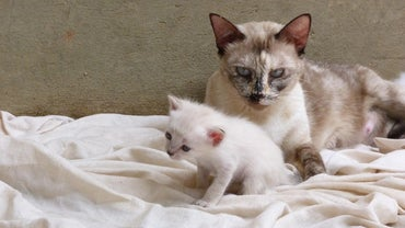 When Are Kittens Ready to Leave Their Mother?