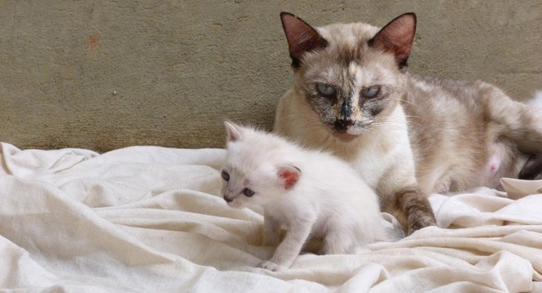kittens-ready-leave-mother