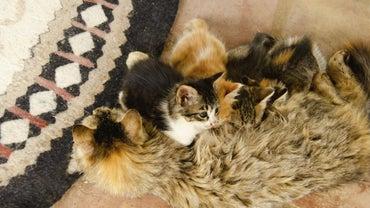 When Do Kittens Stop Nursing?