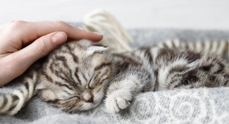 cat-behavior-explained-cats-knead