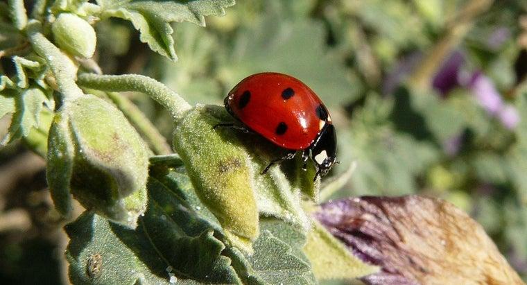ladybug-symbolize