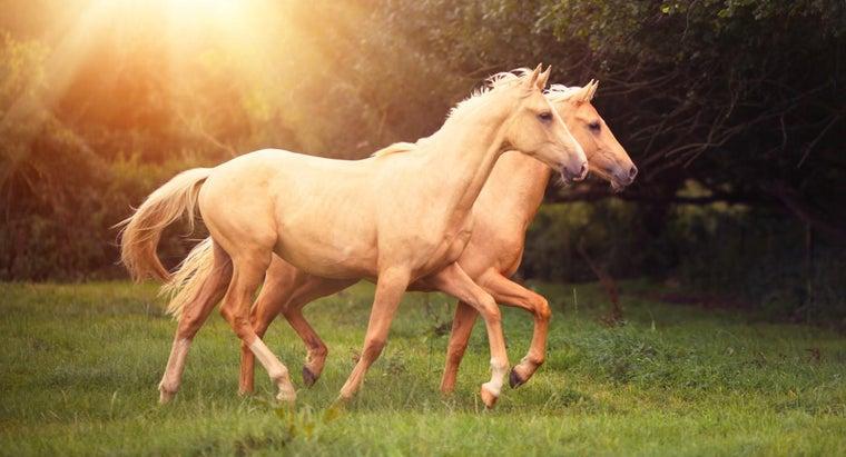 laminitis-horses