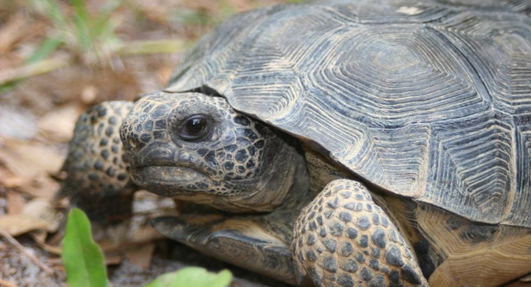 land-turtles-eat