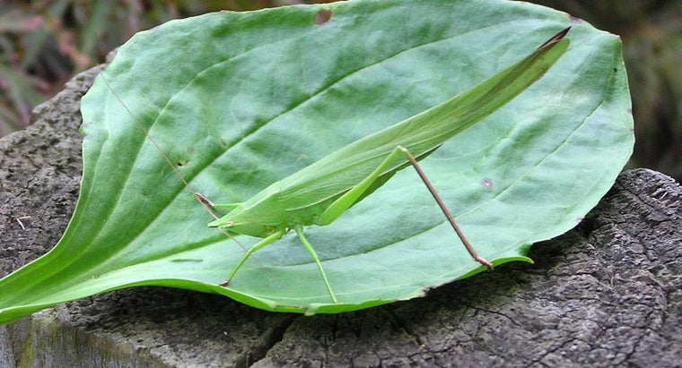 leaf-insects-eat