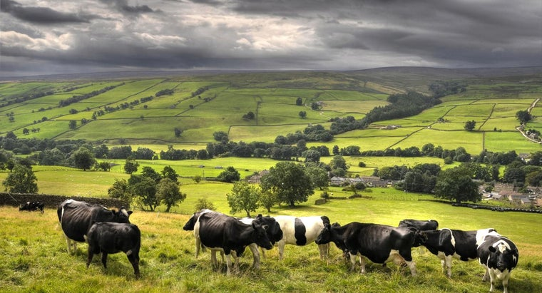 lease-land-cattle-pasture