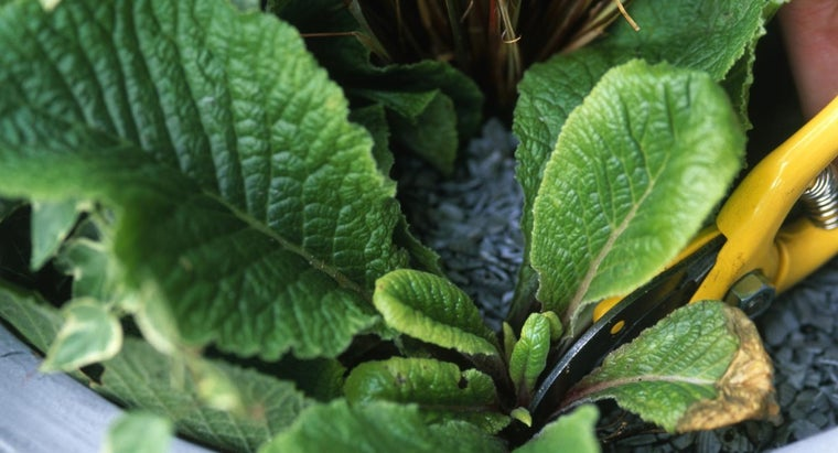 leaves-plants-turning-yellow