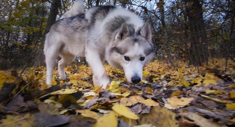 leaves-turn-brown