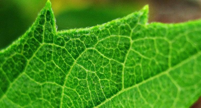 leaves-veins