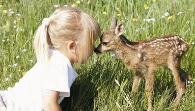 It Is Legal to Own a Pet Deer?