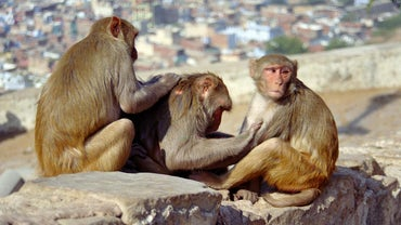 What Is the Life Cycle of a Monkey?