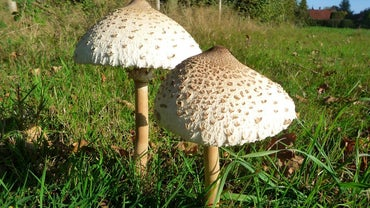 What Are the Three Types of Fungi? | Reference com