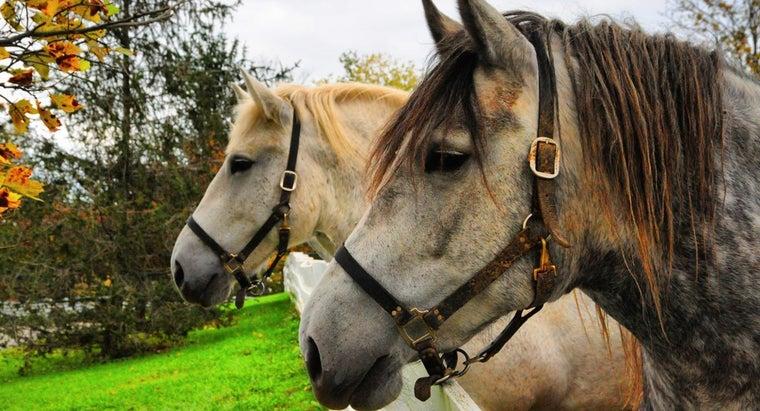 life-span-horse