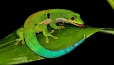 What Is the Lifespan of a Lizard?