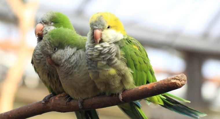 lifespan-quaker-parrot