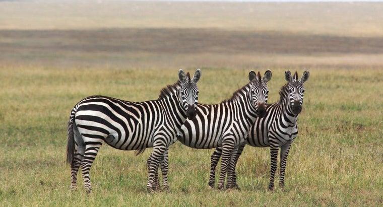 lifespan-zebra